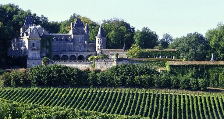 vignes a bordeaux